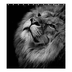 Feline Lion Tawny African Zoo Shower Curtain 66  X 72  (large)