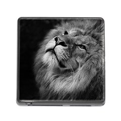 Feline Lion Tawny African Zoo Memory Card Reader (square)