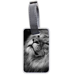 Feline Lion Tawny African Zoo Luggage Tags (one Side)
