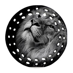 Feline Lion Tawny African Zoo Round Filigree Ornament (two Sides)