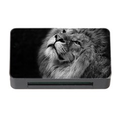 Feline Lion Tawny African Zoo Memory Card Reader With Cf