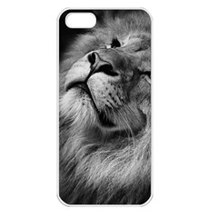 Feline Lion Tawny African Zoo Apple Iphone 5 Seamless Case (white)