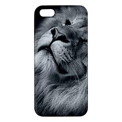 Feline Lion Tawny African Zoo Apple Iphone 5 Premium Hardshell Case