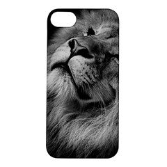 Feline Lion Tawny African Zoo Apple Iphone 5s/ Se Hardshell Case
