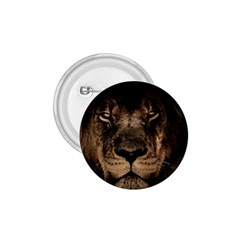 African Lion Mane Close Eyes 1 75  Buttons