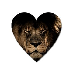 African Lion Mane Close Eyes Heart Magnet