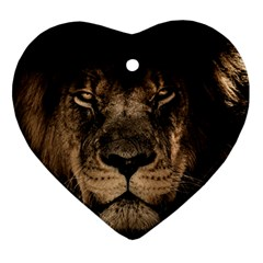 African Lion Mane Close Eyes Heart Ornament (two Sides)