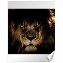 African Lion Mane Close Eyes Canvas 18  X 24