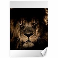 African Lion Mane Close Eyes Canvas 20  X 30