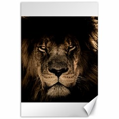 African Lion Mane Close Eyes Canvas 24  X 36