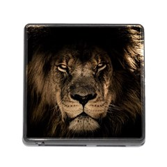 African Lion Mane Close Eyes Memory Card Reader (square)