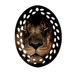 African Lion Mane Close Eyes Oval Filigree Ornament (two Sides)