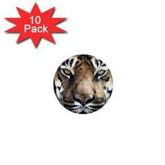 Tiger Bengal Stripes Eyes Close 1  Mini Buttons (10 Pack)