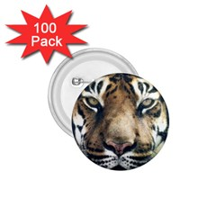 Tiger Bengal Stripes Eyes Close 1 75  Buttons (100 Pack)