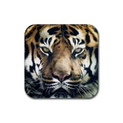 Tiger Bengal Stripes Eyes Close Rubber Coaster (square)