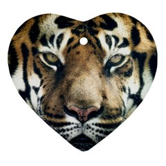 Tiger Bengal Stripes Eyes Close Heart Ornament (two Sides)