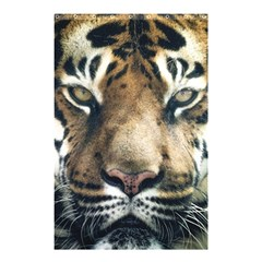 Tiger Bengal Stripes Eyes Close Shower Curtain 48  X 72  (small)