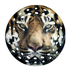 Tiger Bengal Stripes Eyes Close Ornament (round Filigree)