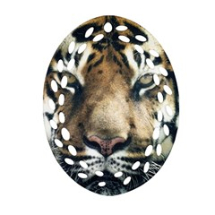 Tiger Bengal Stripes Eyes Close Oval Filigree Ornament (two Sides)