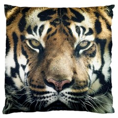 Tiger Bengal Stripes Eyes Close Standard Flano Cushion Case (two Sides)