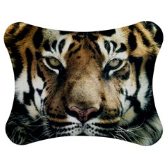 Tiger Bengal Stripes Eyes Close Jigsaw Puzzle Photo Stand (bow)