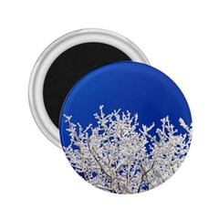 Crown Aesthetic Branches Hoarfrost 2 25  Magnets