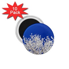 Crown Aesthetic Branches Hoarfrost 1 75  Magnets (10 Pack)