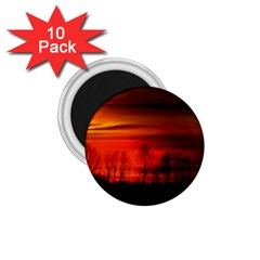 Tree Series Sun Orange Sunset 1 75  Magnets (10 Pack)