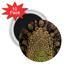 Peacock Feathers Wheel Plumage 2 25  Magnets (10 Pack)