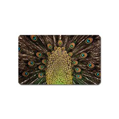 Peacock Feathers Wheel Plumage Magnet (name Card)