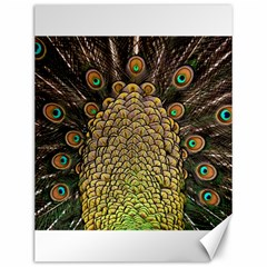 Peacock Feathers Wheel Plumage Canvas 12  X 16
