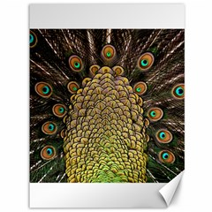 Peacock Feathers Wheel Plumage Canvas 36  X 48