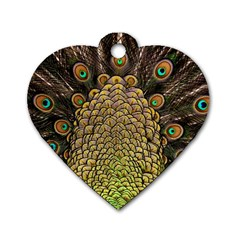 Peacock Feathers Wheel Plumage Dog Tag Heart (one Side)