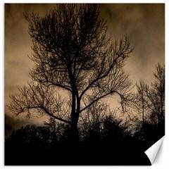 Tree Bushes Black Nature Landscape Canvas 16  X 16