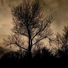 Tree Bushes Black Nature Landscape Magic Photo Cubes