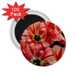 Tulips Flowers Spring 2 25  Magnets (100 Pack)