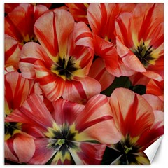 Tulips Flowers Spring Canvas 12  X 12