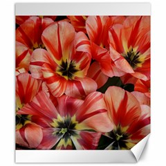 Tulips Flowers Spring Canvas 20  X 24