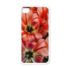 Tulips Flowers Spring Apple Iphone 4 Case (white)