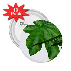 Plant Berry Leaves Green Flower 2 25  Buttons (10 Pack)