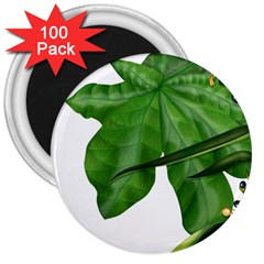 Plant Berry Leaves Green Flower 3  Magnets (100 Pack)