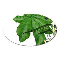 Plant Berry Leaves Green Flower Oval Magnet