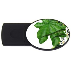 Plant Berry Leaves Green Flower Usb Flash Drive Oval (4 Gb)