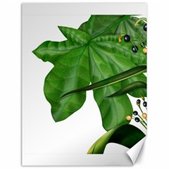 Plant Berry Leaves Green Flower Canvas 18  X 24