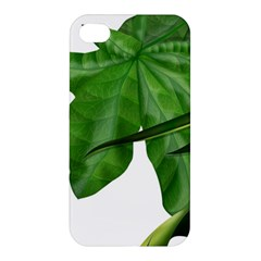 Plant Berry Leaves Green Flower Apple Iphone 4/4s Hardshell Case