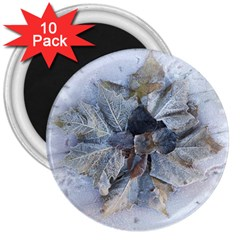 Winter Frost Ice Sheet Leaves 3  Magnets (10 Pack)