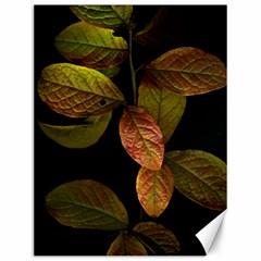 Autumn Leaves Foliage Canvas 12  X 16