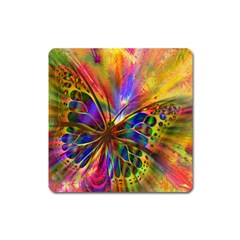 Arrangement Butterfly Aesthetics Square Magnet