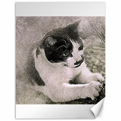 Cat Pet Art Abstract Vintage Canvas 12  X 16