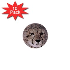 Leopard Art Abstract Vintage Baby 1  Mini Buttons (10 Pack)